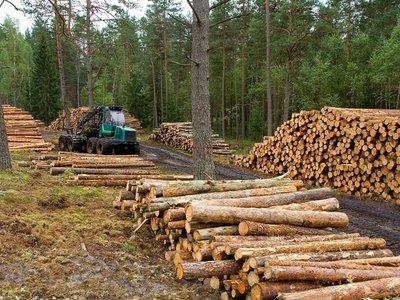 Una nueva Ley obligaría a todos los colombianos a sembrar árboles