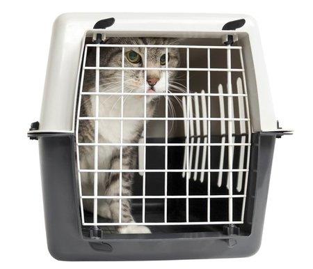 Regulación para entrar con animales de compañía a la Unión Europea