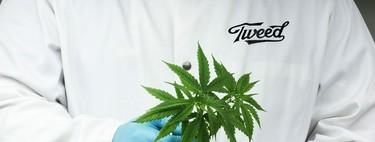 Emprendedores en busca del próximo gran mercado: la marihuana
