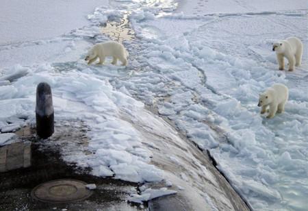 Osos en el hielo