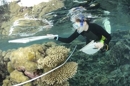 Los arrecifes de coral también están siendo amenazados por las ratas