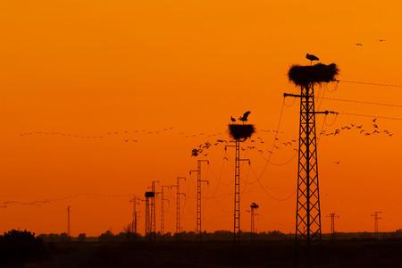 Garden And Urban Birds