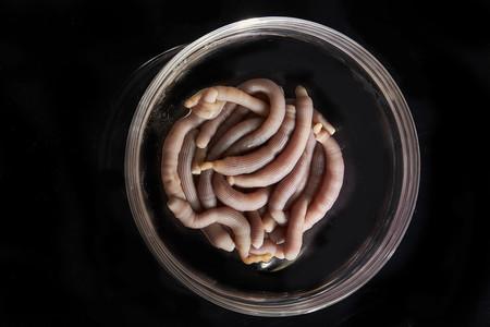 El chef Ángel León quiere que comamos los gusanos que usan en Cádiz como cebo de pesca