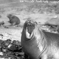 Foto 16 de 18 de la galería las-primeras-fotografias-de-la-antartida en Xataka Foto