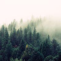 Las plagas forestales emiten el CO2 equivalente a 11 millones de coches solo en Estados Unidos