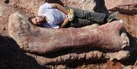 Descubren huesos de la criatura más grande que ha pisado la tierra