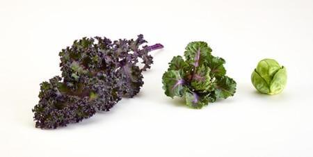 Kale + Coles de Bruselas = Kalettes