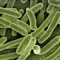 Eliminar infecciones sin el uso de antibióticos podría ser realidad con estos elementos comunes