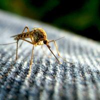 Sí, el zika puede causar síndrome de Guillain-Barré (aunque es improbable)