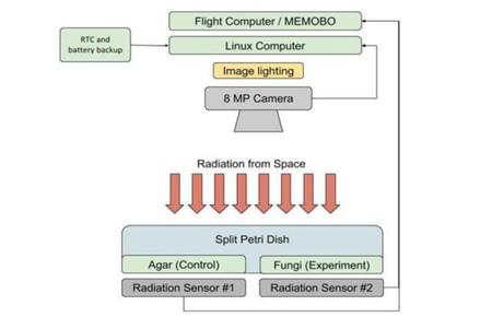 Radiacion Espacial Prueba De Concepto