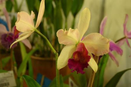 Orquídea 12