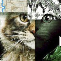 'A los gatos, ni tocarlos': el true crime del momento sirve también para cuestionar la moralidad del género