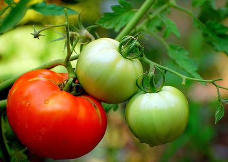 Ahorrar en alojamiento gracias a las granjas ecológicas