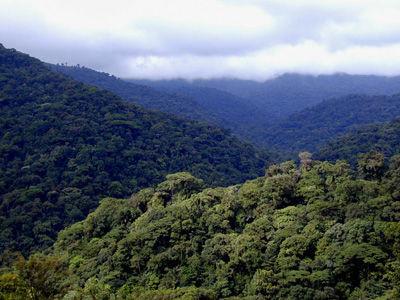 Se ralentiza la pérdida de bosques en el mundo