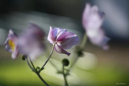 Trucos Mejores Fotos Flores 08