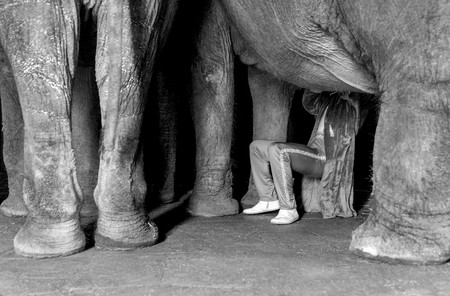 'Amigo circo', la certera visión del mundo circense del fotógrafo Florencio Sánchez
