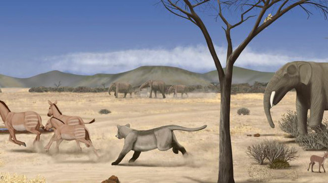 Una Sabana Casi Desertica Se Extendia Por Madrid Hace 14 Millones De Anos Image 380