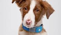 Correa con GPS, encuentra a tu perro sin necesidad de pegar carteles