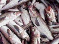 El consumo de pescado protege ante los desórdenes mentales