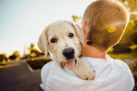Athos y Zuri, dos perros de asistencia para niños con autismo: cómo trabajan los perros de terapia y qué beneficios aportan