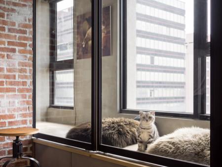 Un loft diseñado pensando en los gatos