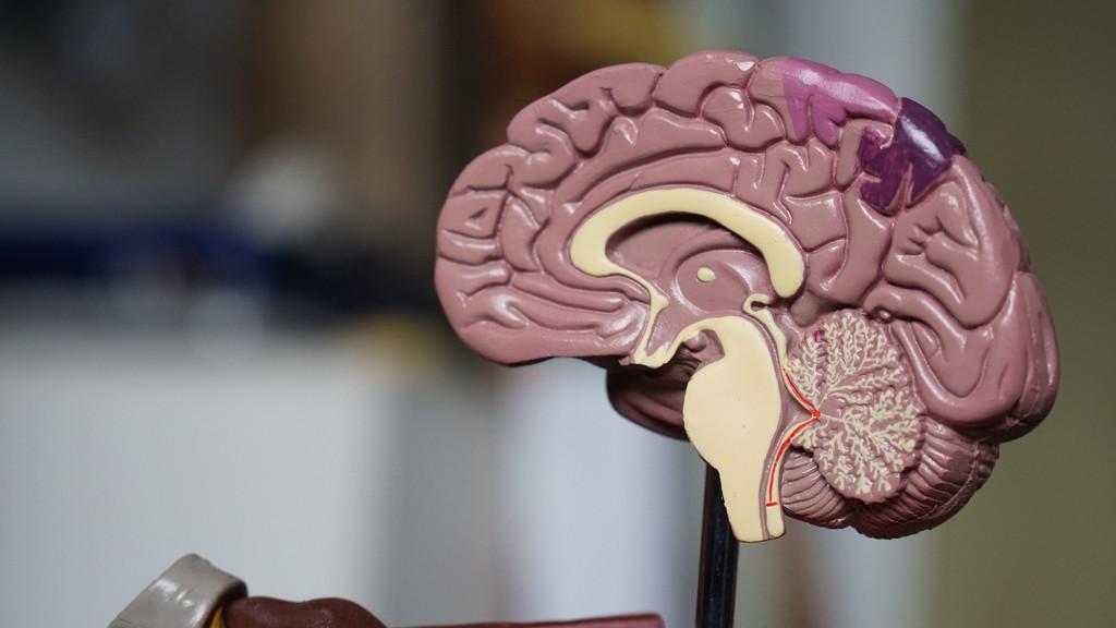La obesidad podría afectar al riego sanguíneo cerebral y aumentar el riesgo de padecer Alzheimer