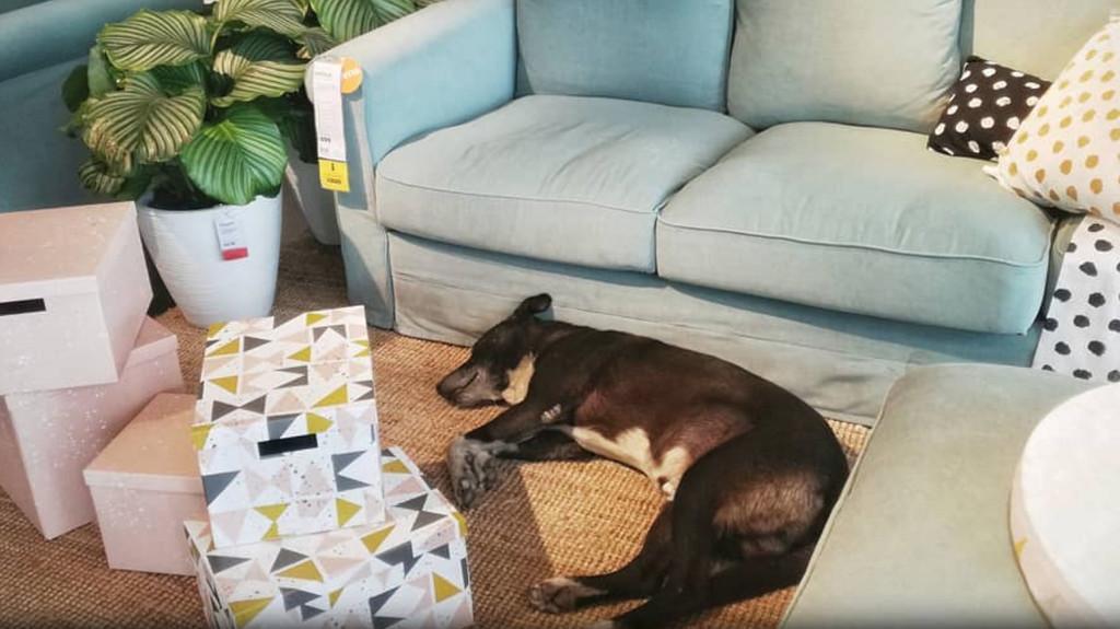 Ikea es noticia porque su tienda de Catania (Italia) es también un hogar para perros callejeros