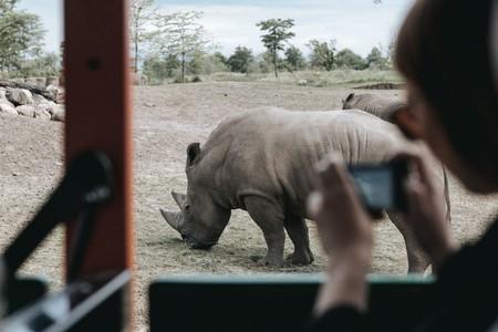 La loca idea de introducir rinocerontes en Australia va en serio (aunque no lo parezca)