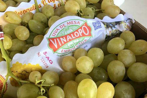 La uva de mesa embolsada de Vinalopó, la uva de las navidades