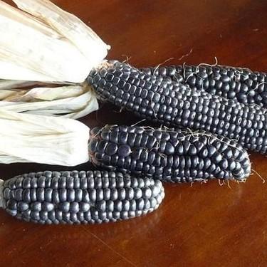 El maíz azul, sus propiedades nutricionales y sus antioxidantes