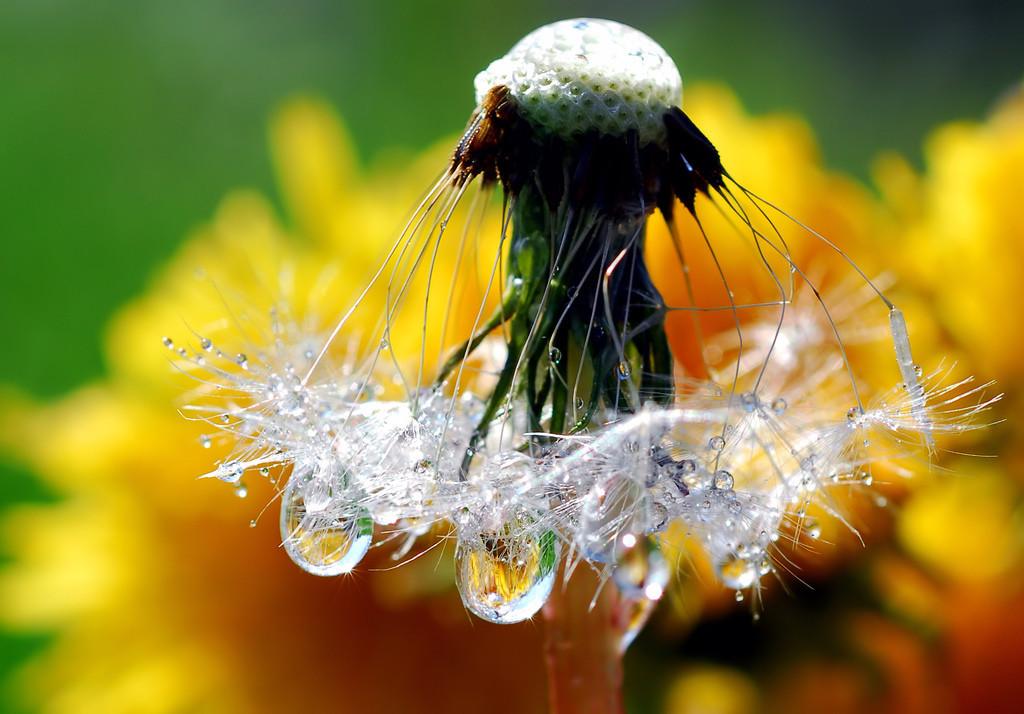 Foto de La belleza de una gota de agua (7/25)