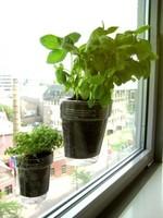Cultivar hierbas aromáticas en casa