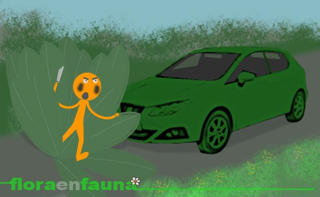 fauna en ruta: Las plantas de la carretera