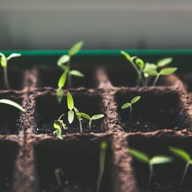 Fichamos el mini invernadero de Lidl: hierbas aromáticas y verduras cultivadas en casa por apenas 7 euros (aunque tengamos poco espacio)