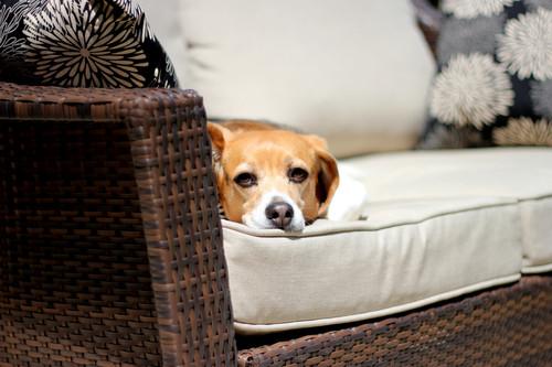 ¿Quieres un día de sofá sin sentirte culpable? Cómo engañar a tu Apple Watch para completar los tres anillos