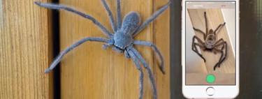 Ya hay un Shazam para identificar a las especies de arañas y serpientes. En Australia, claro