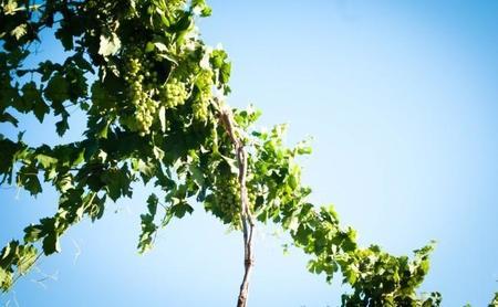Compañeros de ruta: de patrias queridas, tierras vinícolas y gorriones parisinos