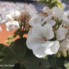 Foto 48 de 71 de la galería oppo-reno-10x-zoom en Xataka