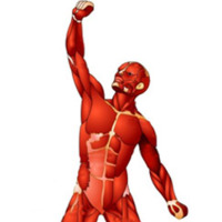 """Músculos """"grandes y pequeños"""", algunos puntos a tener en cuenta"""