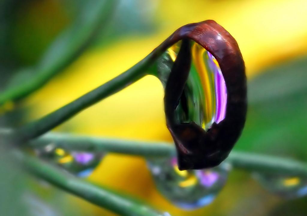 Foto de La belleza de una gota de agua (12/25)