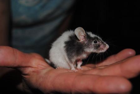 Si te tomas en serio jugar con el PC, estos ratones son una gran inversión