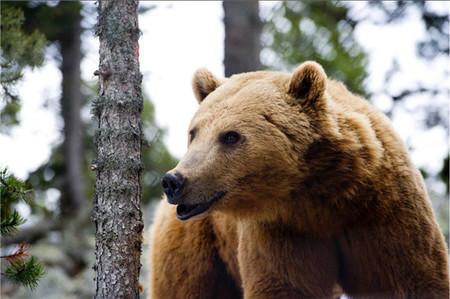Naturlandia osos