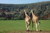 El Parque de la Naturaleza de Cabárceno tendrá una telecabina en el 2015