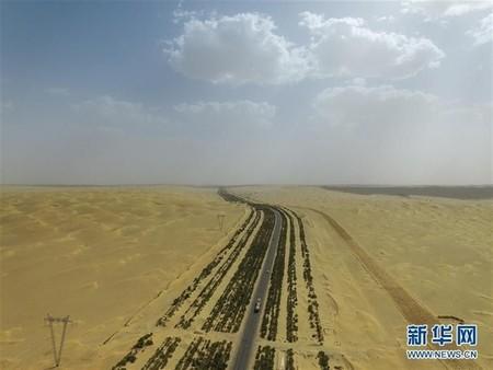 Se quiere construir un muro de vegetación para impedir el avance del desierto del Sáhara