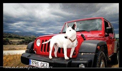 Transporta correctamente a tu mascota