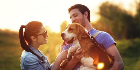 De la homeopatía a la monarquía, la crítica social que esconde el meme del perro que no hace nada