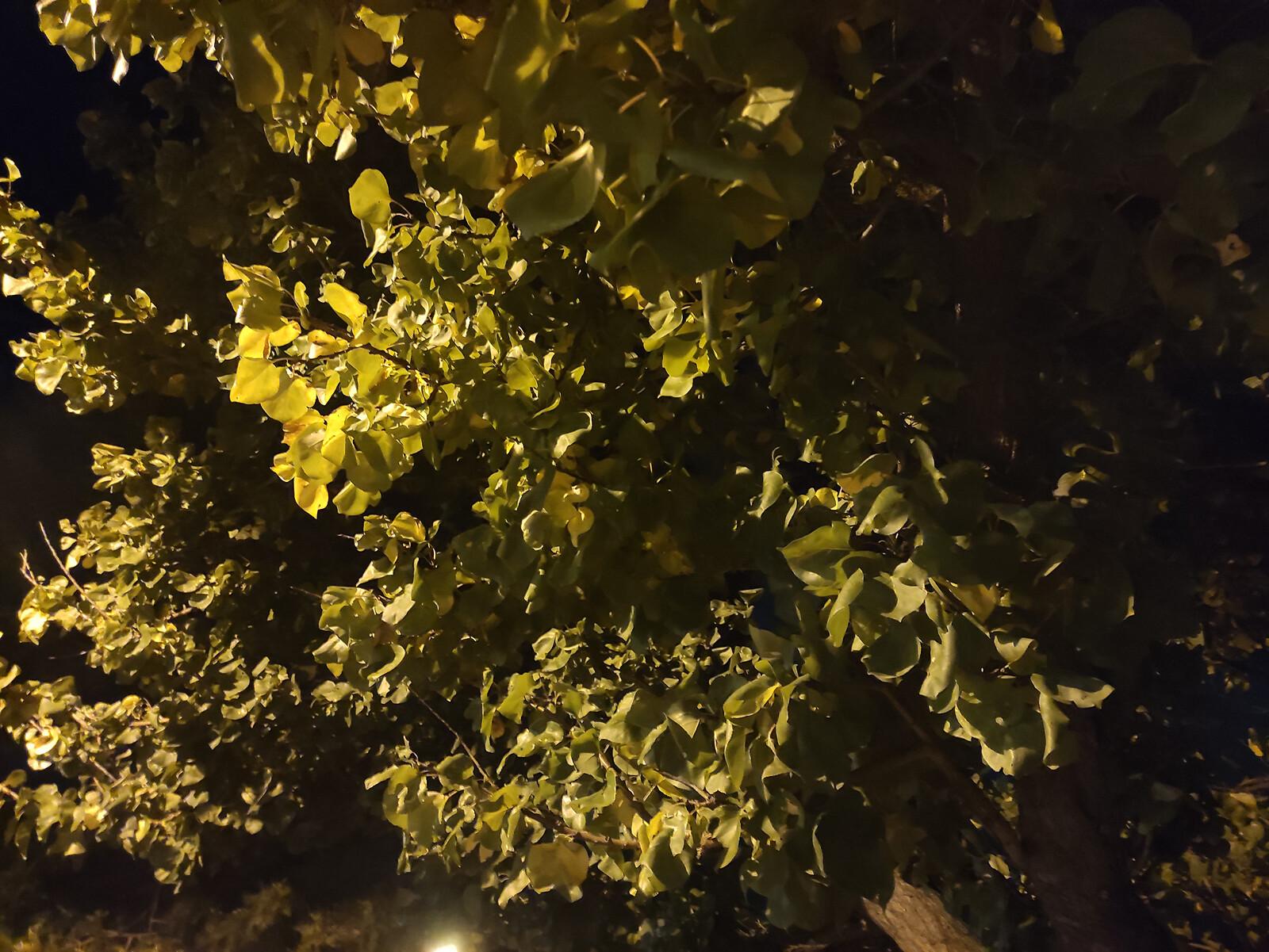Foto de Xiaomi Mi 10T, galería fotográfica (21/42)