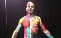 Aprendiendo anatomía mediante el body paint.