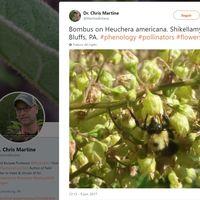 Cómo Twitter ayudó a encontrar una rarísima planta silvestre casi extinta
