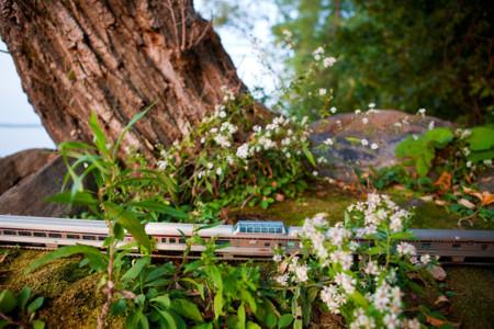 Train Lake Imcoe